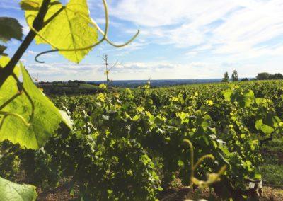 Bg Vigne et Terroir - Chateau Labertrande - Cadillac-loupiac-cote-de-bordeaux